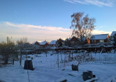 The allotments in the snow